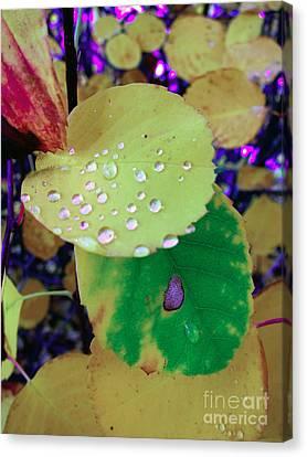 After Rain Canvas Print by Michelle Bergersen