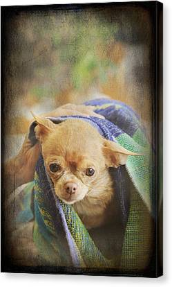 After The Bath Canvas Print by Laurie Search