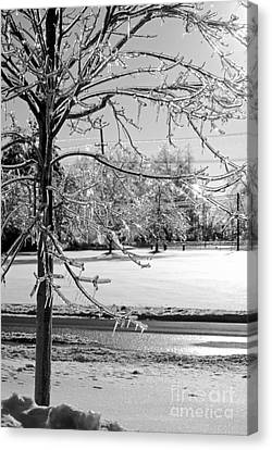 After The Ice Storm Canvas Print by Lila Fisher-Wenzel