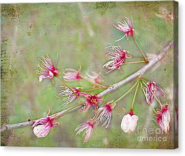 After The Party's Over Canvas Print by Judi Bagwell