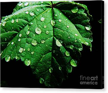 Canvas Print featuring the photograph After The Rain by Lin Haring