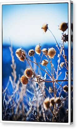 Against The  Blue Sky Canvas Print