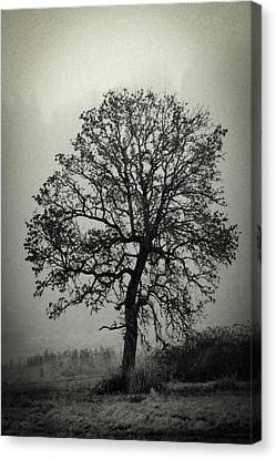 Canvas Print featuring the photograph Age Old Tree by Steve McKinzie