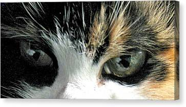 Aged Eyes Canvas Print by Rory Sagner