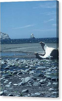Ahoy Canvas Print by Alcina Morello
