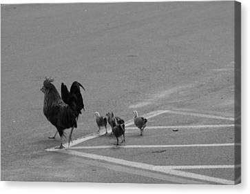 Aint Chicken Canvas Print by Sean Green