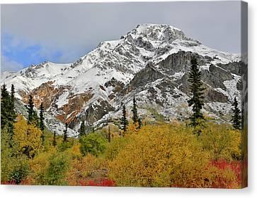 Alaska Fall Colors On Sheep Mountain Canvas Print by Sam Amato