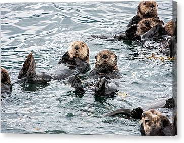 Alaskan Sea Otters Canvas Print by Josh Whalen