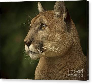 Canvas Print featuring the photograph Alert by Cheri McEachin
