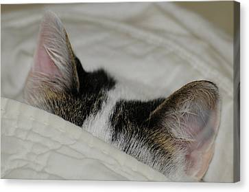 All Ears Canvas Print by Wanda Brandon