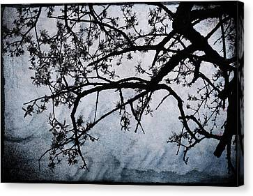 All My Love To Give Canvas Print by Laurie Search