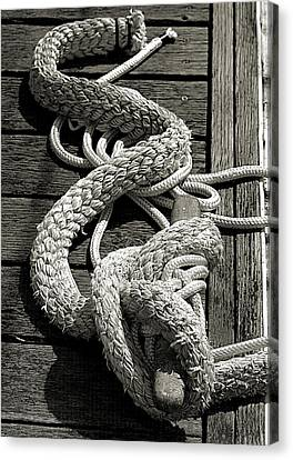 All Tied Up Canvas Print by Bob Wall