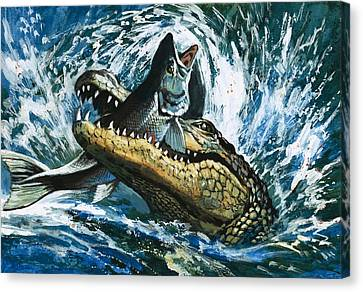 Alligator Eating Fish Canvas Print by English School