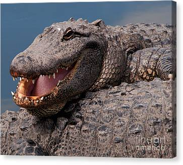 Alligator Smile Canvas Print by Art Whitton