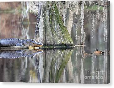 Canvas Print featuring the photograph Alligator Waiting For Dinner by Dan Friend