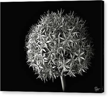 Canvas Print featuring the photograph Allium In Black And White by Endre Balogh