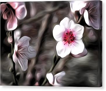 Almond Blossom Canvas Print by Meir Ezrachi