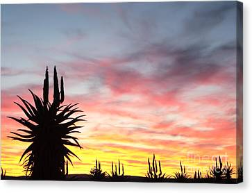 Aloe Ferox  South Africa Canvas Print by Neil Overy