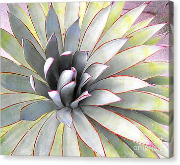 Canvas Print featuring the photograph Aloe by Rebecca Margraf