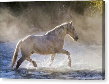 Impasto Horses Canvas Print - Alone In The Mist by Janet Fikar