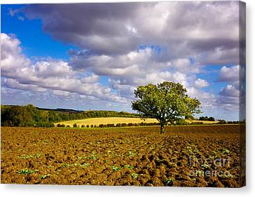 Alone On The Field  Canvas Print by Radoslav Toth