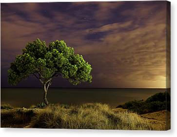 Alone Tree Canvas Print by Alex Stoen Photography