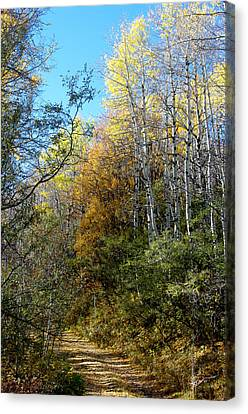 Canvas Print featuring the photograph Along The Back Road by Vicki Pelham