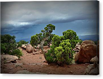 Along The Rim Canvas Print by Marty Koch