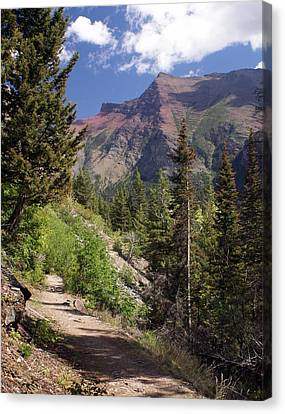 Along The Trail Canvas Print by Marty Koch