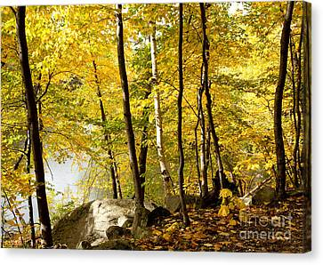 Along The Way Canvas Print by Sue OConnor