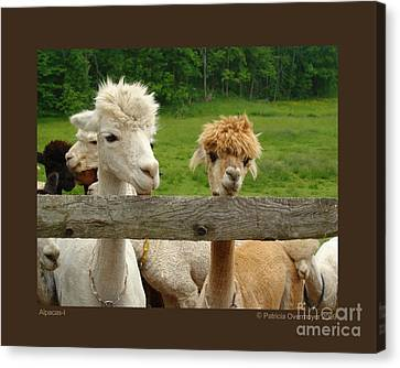 Canvas Print featuring the photograph Alpacas-i by Patricia Overmoyer