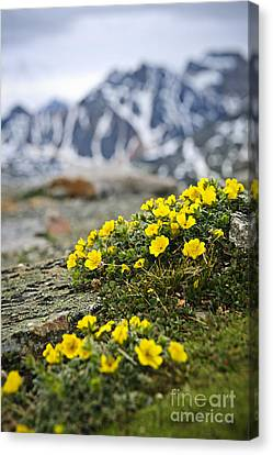 Alpine Meadow  Canvas Print by Elena Elisseeva