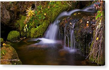 Alpine Waterfall Canvas Print by Brian Kerls