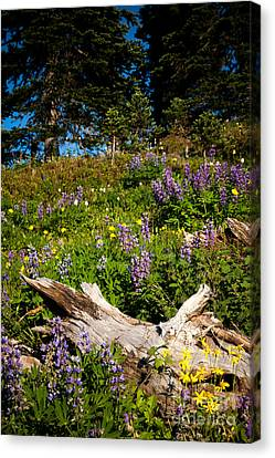 Canvas Print featuring the photograph Alpine Wildflower Meadow by Karen Lee Ensley