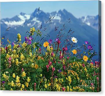 Alpine Wildflowers Canvas Print by Hermann Eisenbeiss and Photo Researchers