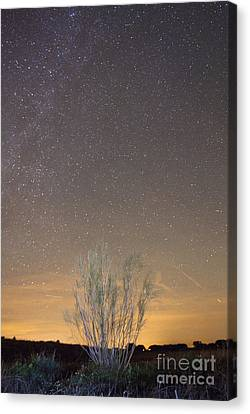Alqueva Dark Sky Reserve Canvas Print by Andre Goncalves