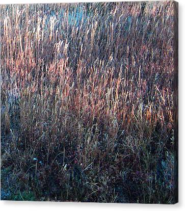 Amazing Grass Two Canvas Print by Ric Soulen