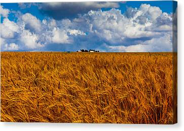 Amber Waves Of Grain Canvas Print by Doug Long