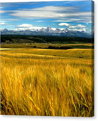 Amber Waves Canvas Print by Rusty Enderle