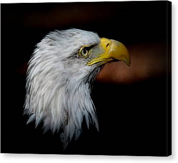 Canvas Print featuring the photograph American Bald Eagle by Steve McKinzie