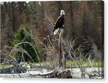 American Eagle On Snake River Canvas Print by Living Color Photography Lorraine Lynch