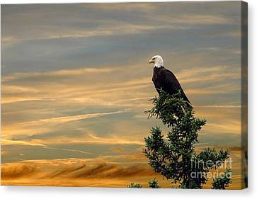 Canvas Print featuring the photograph American Eagle Sunset by Dan Friend