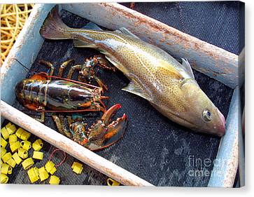 American Lobster And Cod Caught Off Chatham On Cape Cod Canvas Print by Matt Suess