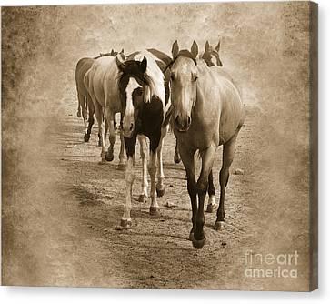 American Quarter Horse Herd In Sepia Canvas Print by Betty LaRue