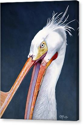 American White Pelican Canvas Print by Donna Proctor