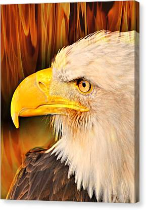 Americasn Bald Eagle Canvas Print by Marty Koch