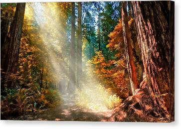 Canvas Print featuring the photograph Amongst Giants  by Thomas Born