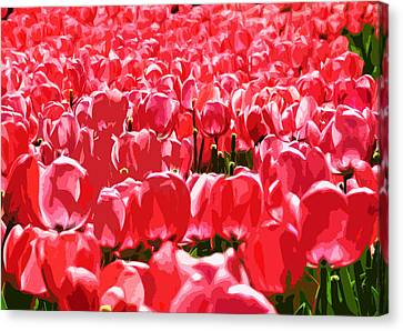Amsterdam Tulips Canvas Print by Phill Petrovic