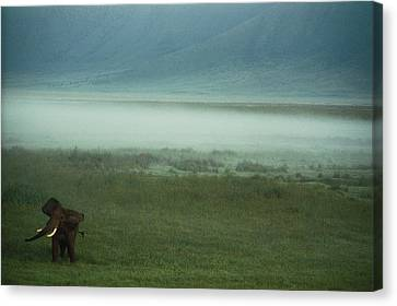 An African Elephant In The Ngorongoro Canvas Print by Chris Johns