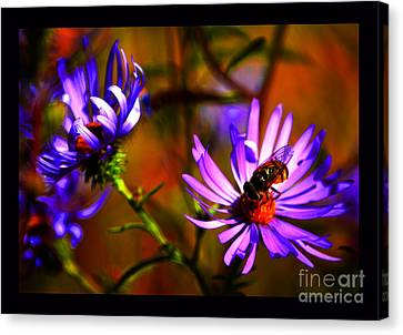 An Afternoon Bee In The Asters Canvas Print by Susanne Still